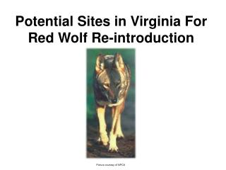 Potential Sites in Virginia For Red Wolf Re-introduction