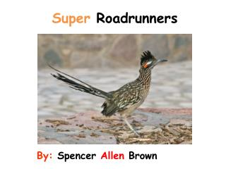Super  Roadrunners