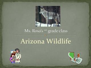 Ms. Rosa's  1st  grade class