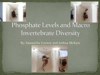 Phosphate Levels and Macro Invertebrate Diversity