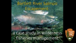 Bartlett River Salmon Escapement:  a case study in wilderness fisheries management