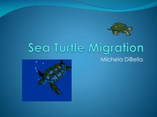 Sea Turtle Migration