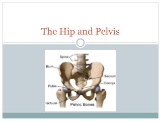 The Hip and Pelvis