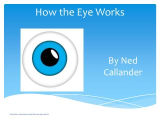 How the Eye Works