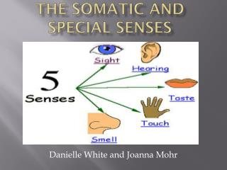 The somatic and special Senses