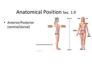Anatomical Position  Sec. 1.9