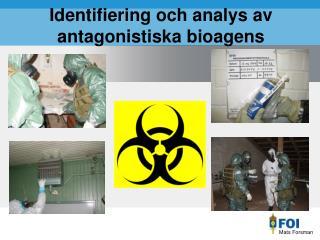 Identifiering och analys av  antagonistiska bioagens