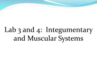 Lab 3 and 4:   Integumentary  and Muscular Systems