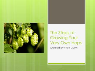 The Steps of Growing Your Very Own Hops