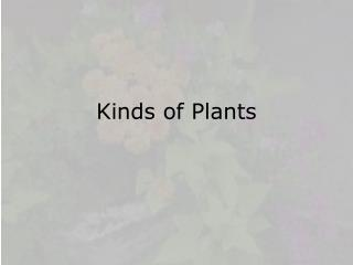 Kinds of Plants