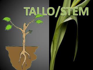 TALLO/STEM