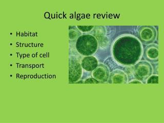 Quick algae review