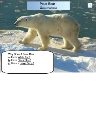 Why Does A Polar Bear: a) Have  White Fur? b ) Have  Black Skin? c ) Have a  Large Body?
