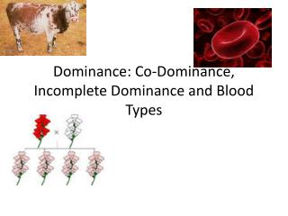 Dominance: Co-Dominance, Incomplete Dominance and Blood Types