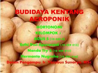 BUDIDAYA KENTANG AEROPONIK