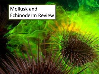 Mollusk and Echinoderm Review