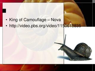 King of Camouflage � Nova http://video.pbs.org/video/1150618835