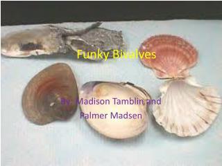 Funky Bivalves