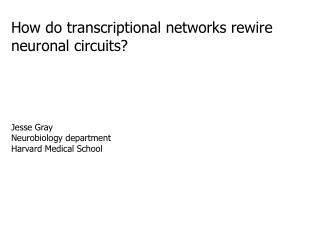 How do transcriptional networks rewire neuronal circuits?