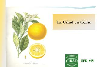Le Cirad en Corse