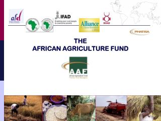 THE AFRICAN AGRICULTURE FUND