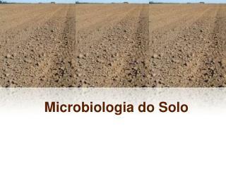 Microbiologia do Solo