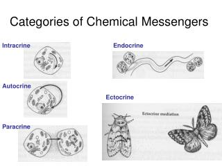 Categories of Chemical  Messengers