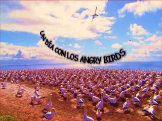 UN DÍA CON LOS ANGRY BIRDS