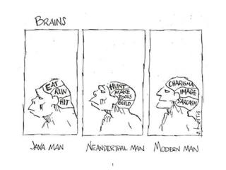 How diet affects the brain: evolution  development