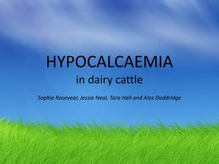 HYPOCALCAEMIA in dairy cattle