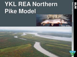 YKL REA Northern Pike Model
