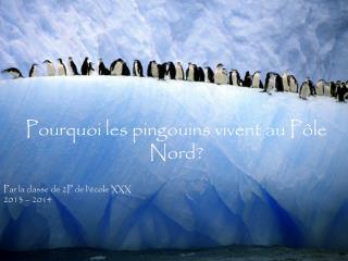 Pourquoi les pingouins vivent au Pôle Nord? Par la classe de 2P de l'école  XXX 2013 – 2014