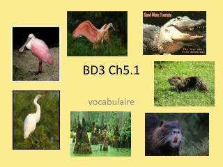 BD3 Ch5.1