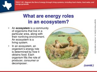 What are energy roles  in an ecosystem?