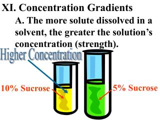 XI. Concentration Gradients