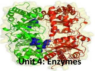 Unit 4: Enzymes