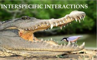 INTERSPECIFIC INTERACTIONS