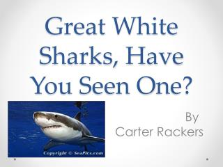 Great White Sharks, Have You  S een  O ne?