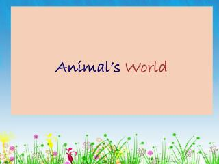 Animal's  World