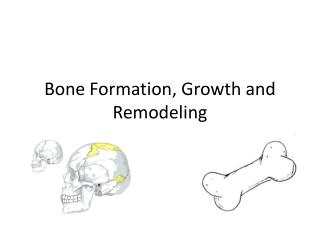 Bone Formation, Growth and Remodeling