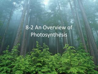 8-2 An Overview of Photosynthesis