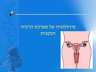 פיזיולוגיה של מערכת  הרביה הנקבית