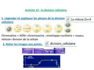 Activité 15 : la division cellulaire