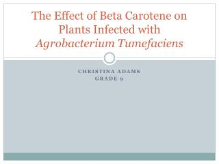 The Effect of Beta Carotene on Plants Infected with  Agrobacterium Tumefaciens