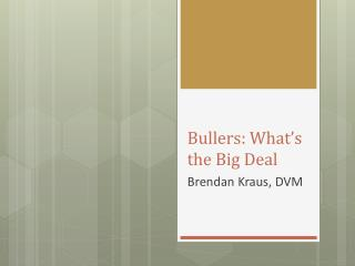 Bullers :  What's the Big Deal