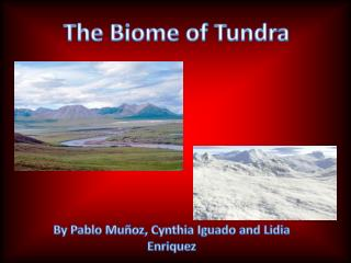 The Biome of Tundra