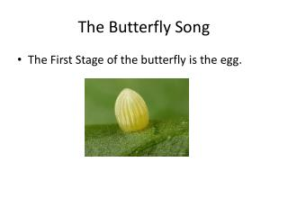 The Butterfly Song
