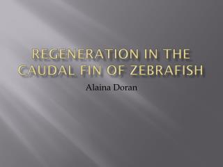 Regeneration in the caudal fin of  Zebrafish