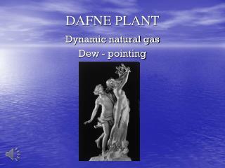 DAFNE PLANT