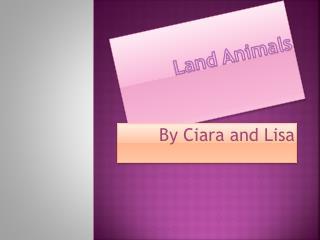 Land Animals